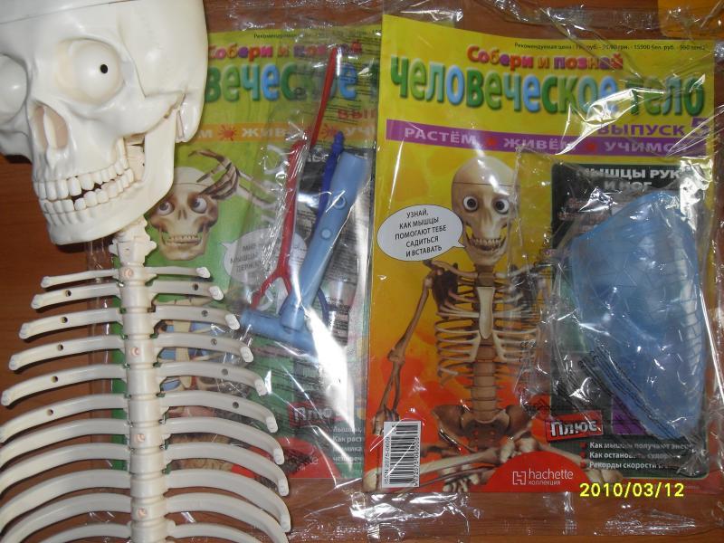 Скелет из журнала - SDC10038.JPG